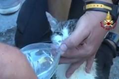 Итальянцы опубликовали видео спасения кошки спустя 5 дней после землетрясения