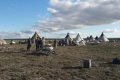 Сибирская язва подтверждена у восьми человек на Ямале, один ребенок умер