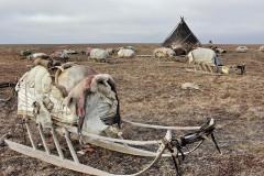 На Ямале собирают помощь кочевникам из зоны распространения сибирской язвы
