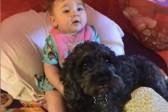 В США собака ценой своей жизни спасла ребенка на пожаре