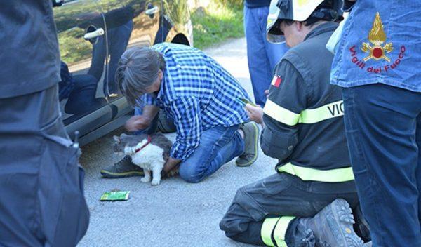 В Италии нашли живого кота, который провел под завалами более месяца