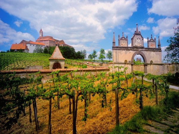 world_austria_austrian_vineyard_007832_