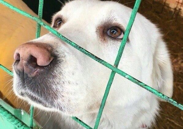При пожаре в кемеровском приюте для животных погибли 120 собак