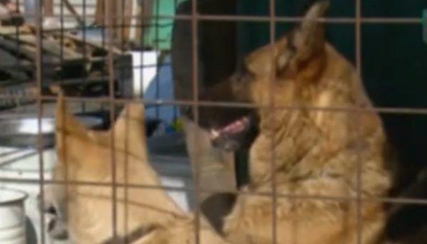Впожаре вкемеровском приюте погибли неменее 100 собак