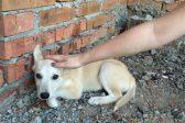 Хабаровская полиция задержала одну из девочек, убивавших животных
