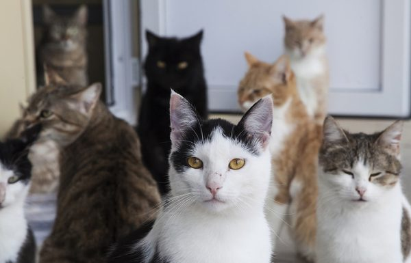 Подозреваемую в издевательствах над животными в Хабаровске поместили под домашний арест