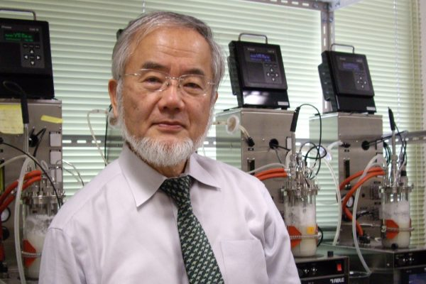 Нобелевская премия по медицине: награда за самоедство