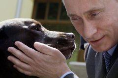 Путин поддержал ужесточение наказания за издевательства над животными