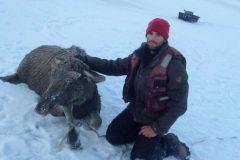 Алтайский рыбак выложил видео спасения лосенка, провалившегося под лед