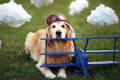 В московских аэропортах появятся собаки, помогающие бороться со стрессом