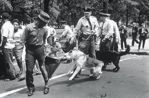 Чарльз Мур. Бирмингем, штат Алабама. 1963. «Фотографии полицейских собак, бросающихся на демонстрантов в Бирмингеме, совершенно переменили общественное настроение», – Артур Шлезингер, историк.