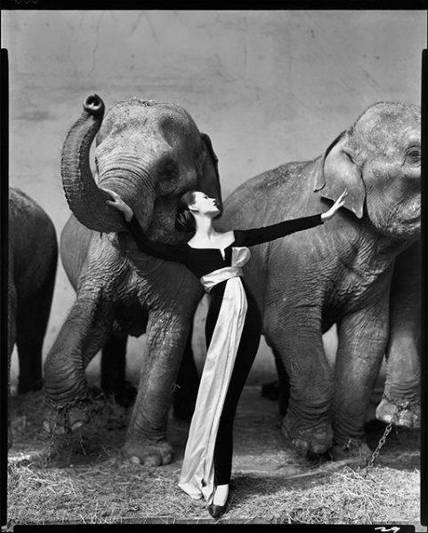 Ричард Аведон. Довима и слоны, вечернее платье от Диор, «Зимний Цирк». Париж, август 1955.