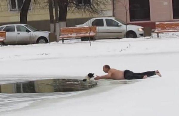 Костромич босиком бросился на спасение упавшей в полынью собаки