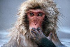 Ученые доказали, что у обезьян есть анатомическая способность к речи