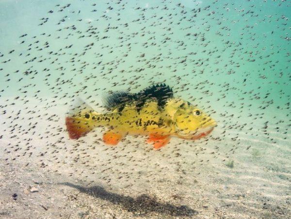Лучшие фото природы – 2016 по версии National Geographic