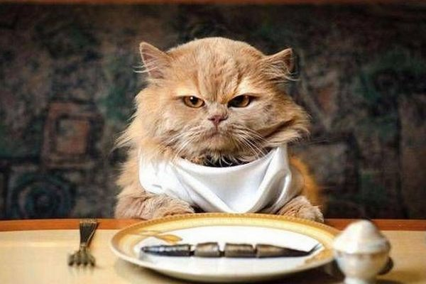 Кошачья ортодоксия