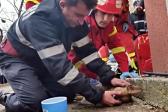 Пожарный спас собаку, сделав ей искусственное дыхание (+видео)