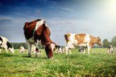 Ученые обнаружили в бурятском молоке уникальный природный консервант