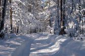 Директор томской школы, дети из которой заблудились в лесу, будет уволен