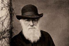 В Турции из школьной программы убрали эволюционную теорию Дарвина