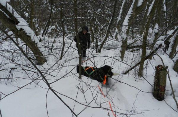 Бездомные собаки помогут искать потерявшихся людей в Ярославской области