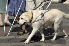 Правительство расширило обеспечение инвалидов собаками-поводырями