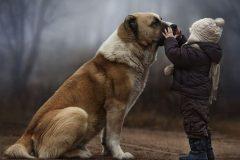 На Алтае собака спасла брошенного матерью на холоде ребенка