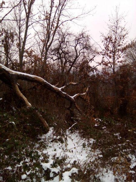 Лес у села Йовац