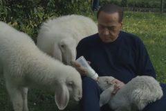 Берлускони спас ягнят с бойни и призвал к вегетарианской Пасхе (видео)