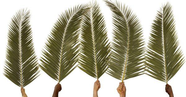 30881-palmbranches-palms-palmsunday-1200w-tn