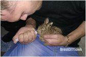 В Белоруссии водитель спас зайчонка на дороге