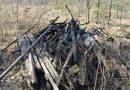 Запрет на выезд в лес и разведение костров введен в 51 регионе России