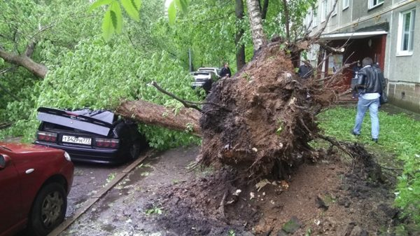Открыта «горячая линия» МЧС в связи с ураганом в Москве
