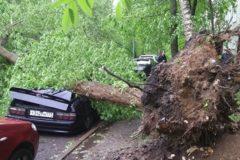 В Москве прогнозируют повторение урагана