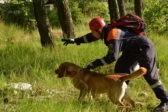 В Брянской области нашли пропавшего два дня назад мальчика