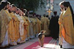 Жила-была собака, и все ее любили