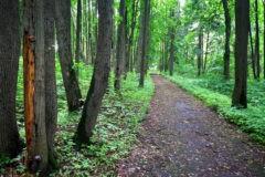 Садово-парковый компромисс: что сделают с усадьбой в Опалихе