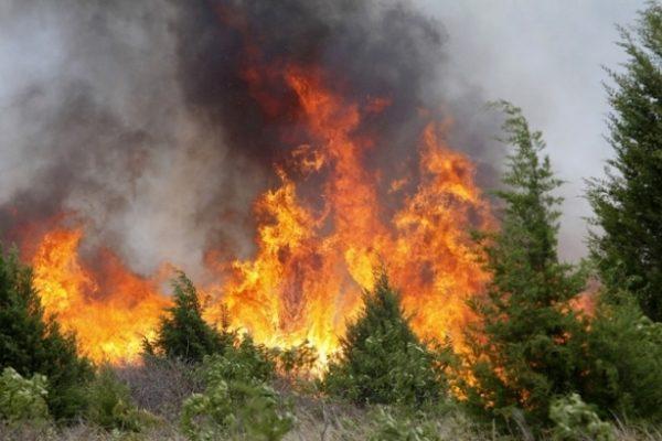 Внескольких районах Ханты-Мансийского автономного округа введен режимЧС из-за природных пожаров