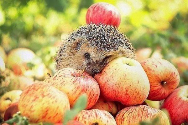 Яблочный Спас – 2017: топ нелепых заголовков