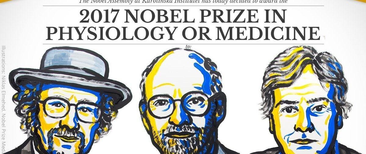 Нобелевская премия за биоритмы — что открыли три американца