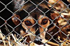В поддержку закона о защите животных от жестокости выступили 1,5 миллиона россиян