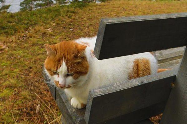 Кот по имени… Шарик