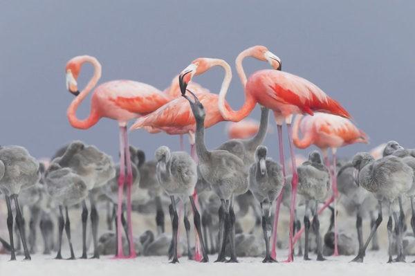 Дикая природа – лучшие снимки года (20 фото)