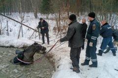 Священник помог спасателям вытащить провалившегося под лед коня