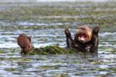 Реактивный гусь и усатый заяц – самые смешные животные 2017 года