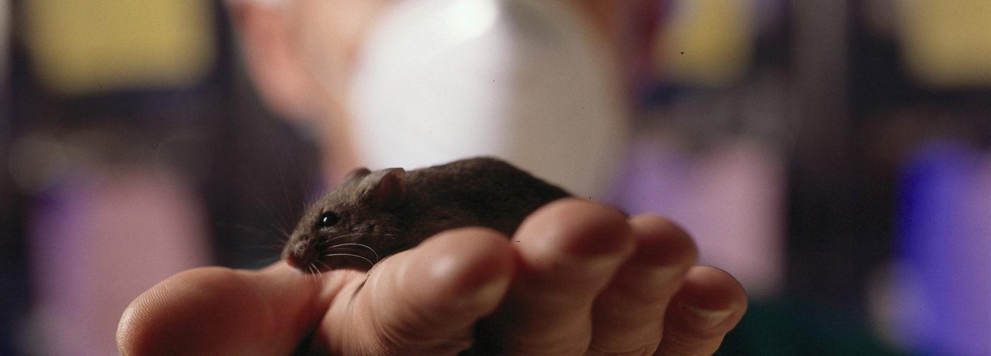 Если вы мышь с болезнью Альцгеймера – вам повезло