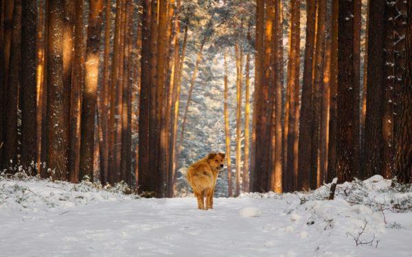 Заблудившимся в лесу уральским подросткам не дали замерзнуть их собаки