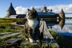 Монастырские коты – утешение и забота (ФОТО)