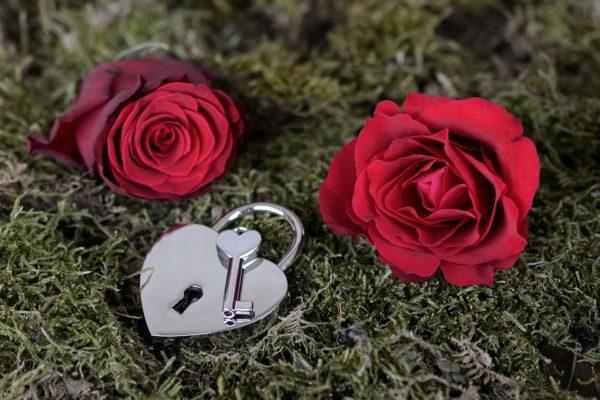 День святого Валентина - розы