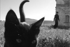 Жизнь и труды монастырского кота Амфилохия